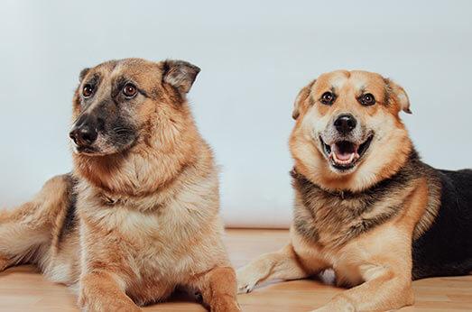 Los perros más sexys de Valencia